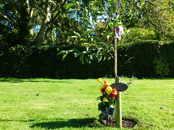 A single Memorial Tree with bronze plaque